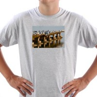 Majica Galebovi