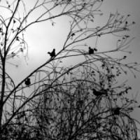 Platno Ptice na drvetu
