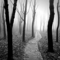 Platno šuma
